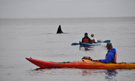 Guided Kayak Tour in Eastsound, WA (3996962)