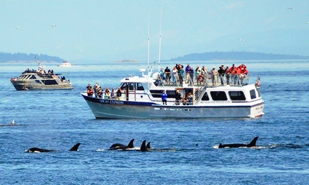 Whale-Watching Tour in Eastsound, WA (3996963)