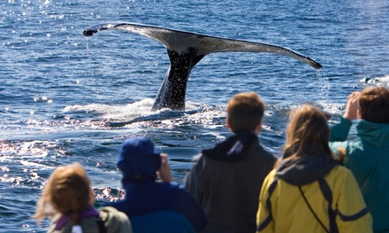 Whale-Watching Tour in Eastsound, WA (4003509)