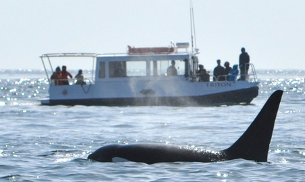 Whale Watching & Learning Tour in Eastsound, WA (4142348)