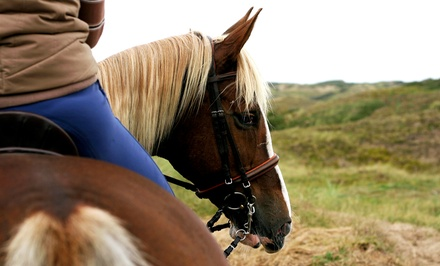 Horse Back Riding - Training in Middlebury, VT (4278823)